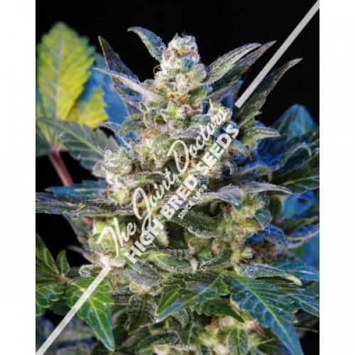 Diesel Ryder Autoflowering Feminised Seeds