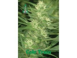 Cole Train Feminised Seeds
