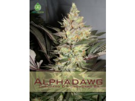 Alpha Dawg Regular Seeds