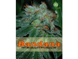 Bandana Regular Seeds