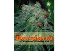 Bandana Regular Seeds