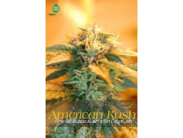 American Kush Regular Seeds