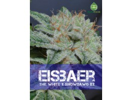Eisbaer Regular Seeds