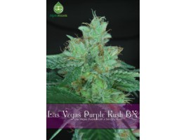 Las Vegas Purple Kush BX Regular Seeds