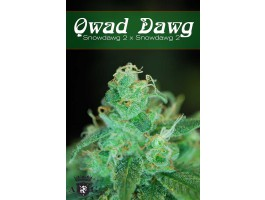 Qwad Dawg Regular Seeds