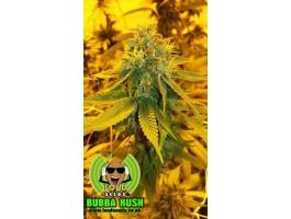 Pre 98 Bubba Kush Feminised Seeds