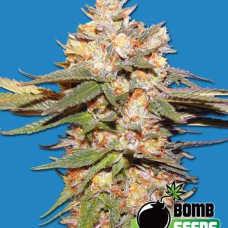 Big Bomb AUTO Feminised Seeds