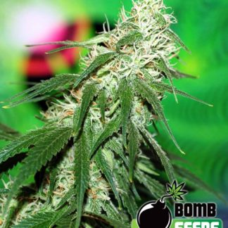 Buzz Bomb Feminised Seeds