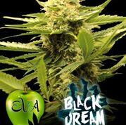 Black Dream Feminised