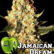 Jamaican Dream Feminised