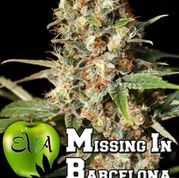 Missing in Barcelona (M.I.B.) Feminised