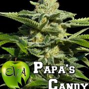 Papa's Candy Feminised
