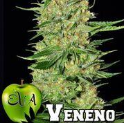 Veneno Feminised