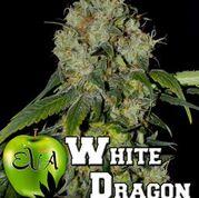White Dragon Feminised