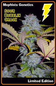 Auto Sour Bubblin' Crack Fem Seeds (Limited edition)