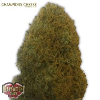 Champion Feminised (AKA Champions Cheese)