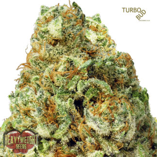 Auto Turbo Bud Feminised