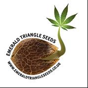 OG Critical Feminised Seeds