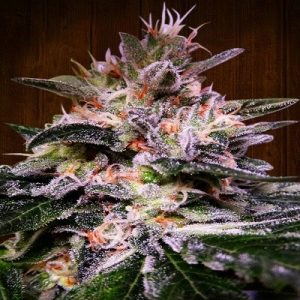 bubba_hash ace seeds