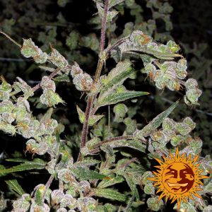 large_dr-grinspoon_1_644485