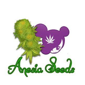 Anesia seeds